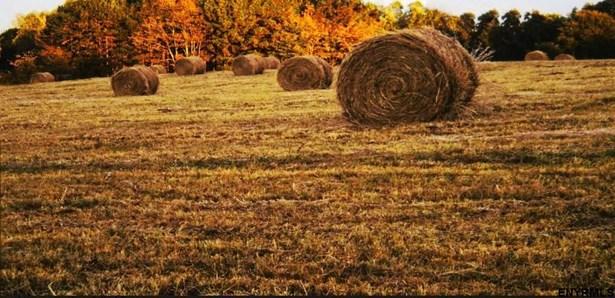 603 Hinds Rd, Argyle, NY - USA (photo 2)