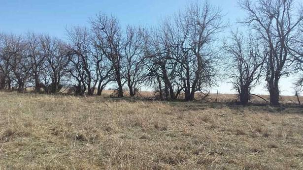 Farm - Burden, KS (photo 3)