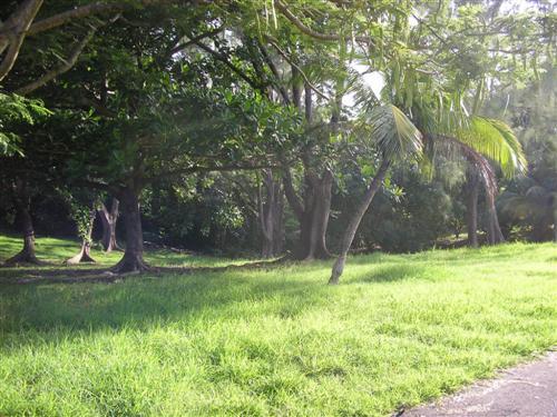 Rowans Park , St. George - BRB (photo 3)