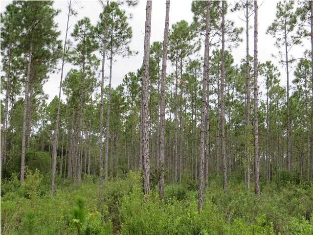 Farm/Timberland - CARRABELLE, FL (photo 3)