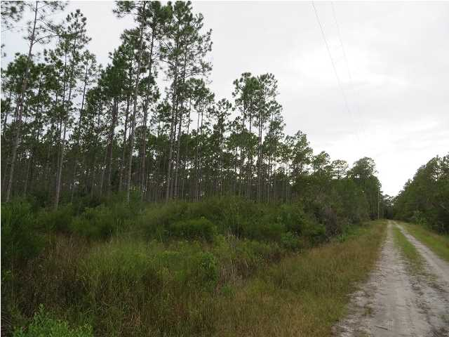 Farm/Timberland - CARRABELLE, FL (photo 4)