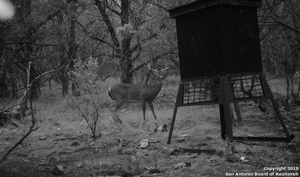 11350 Rebecca Creek Rd, Spring Branch, TX - USA (photo 3)