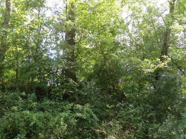 0 Quarry Court Lot #121, Chesterville, OH - USA (photo 2)