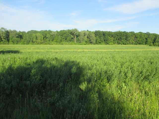 0 N County Line, Deerfield, MI - USA (photo 2)