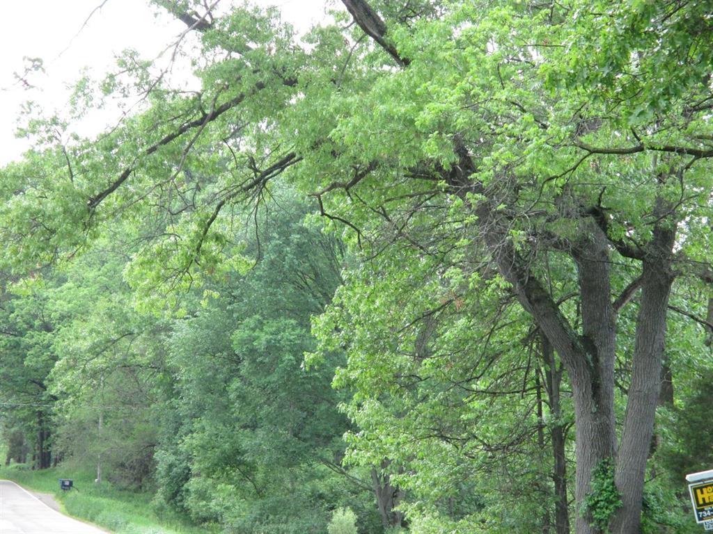 0 Woodlands, Napoleon, MI - USA (photo 1)