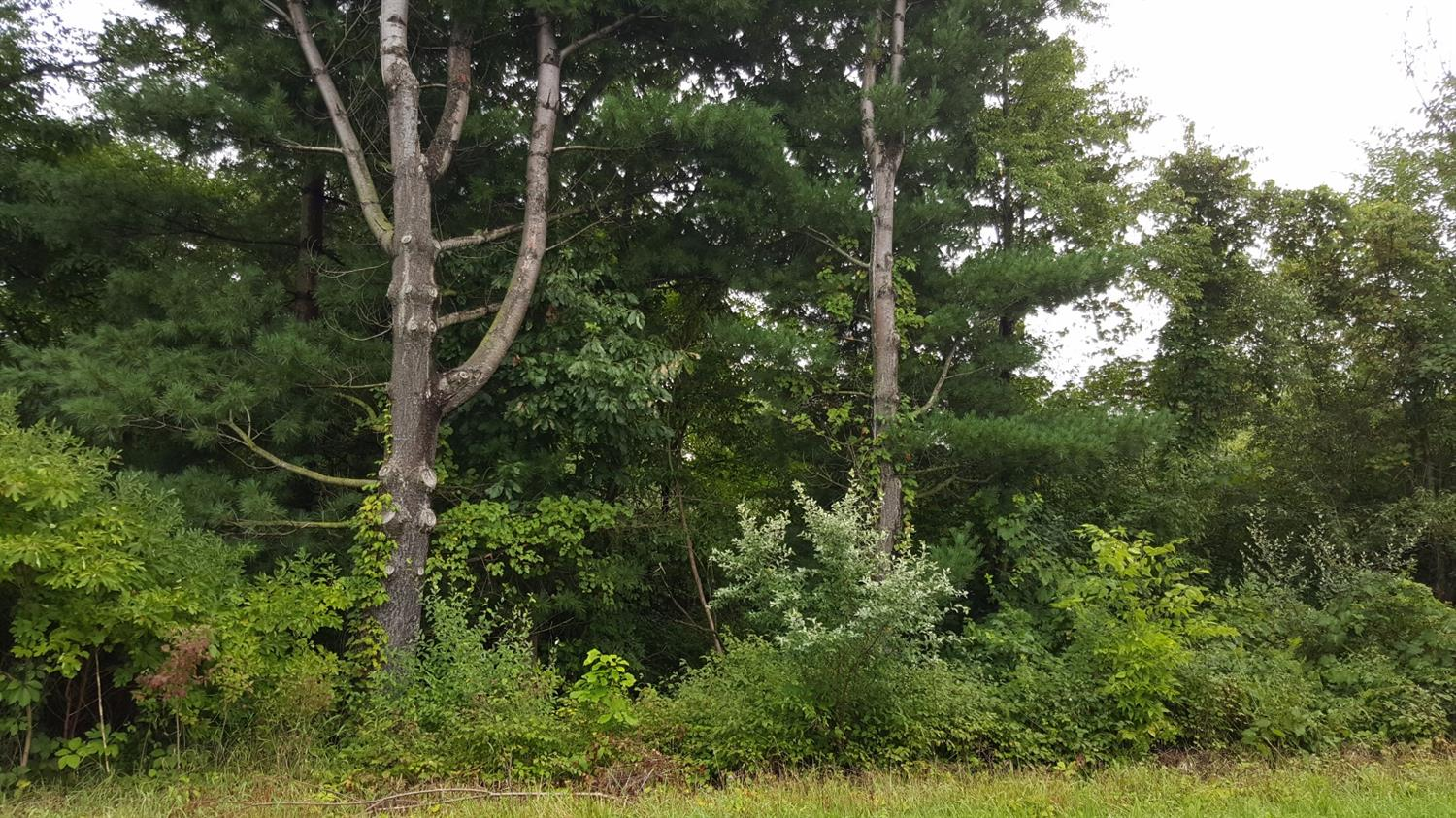 Vacant Land/Acreage - Westville, IN (photo 1)