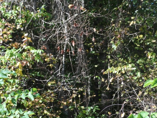 Single Family - Maynardville, TN (photo 5)