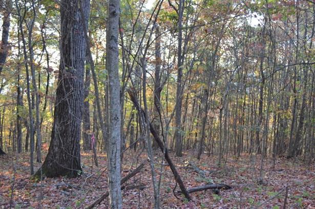 Single Family - Caryville, TN (photo 1)