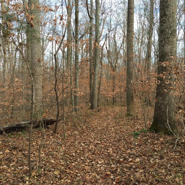 Recreational,Rural,Single Family - Lenoir City, TN (photo 4)