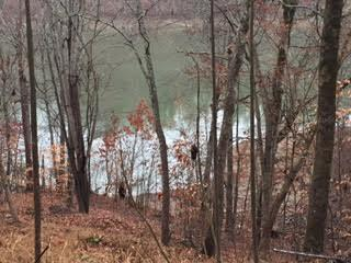 Lake Front,Single Family,Waterfront Access - New Tazewell, TN (photo 2)