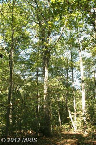 22335 Hicks Landing Rd, Rappahannock Academy, VA - USA (photo 4)