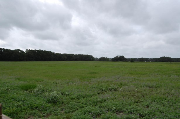 Vacant Land - Morriston, FL (photo 1)