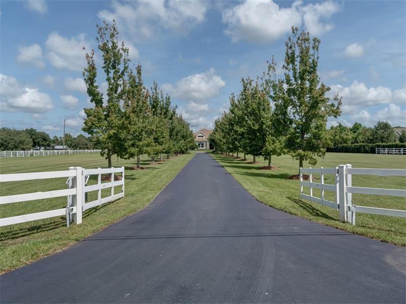 Single Family Home, Contemporary - ODESSA, FL (photo 3)
