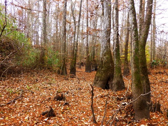 Land/Farm - Toomsboro, GA (photo 4)
