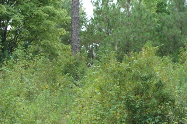 Residential Building Lot - Forsyth, GA (photo 3)