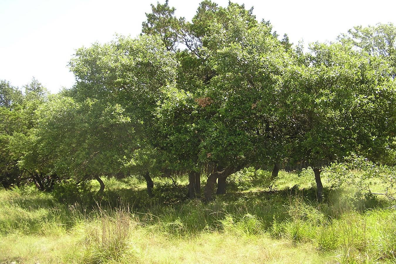 503   Breathless View , San Antonio, TX - USA (photo 4)