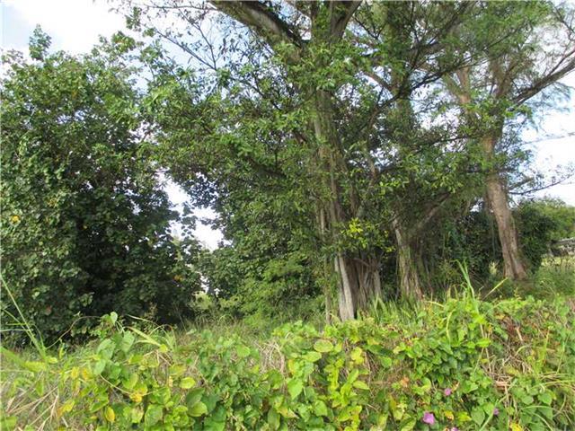 Land - North Miami, FL (photo 3)