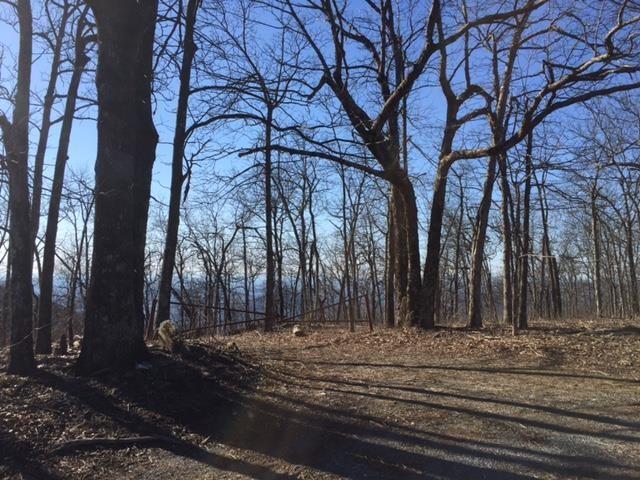 Land Lot - Jasper, GA (photo 2)