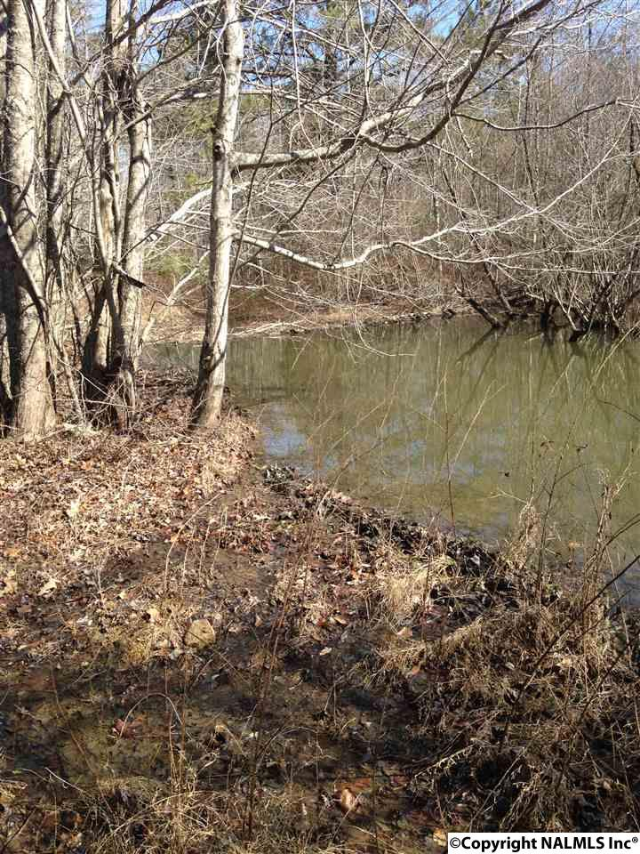 65 Acres County Road 364, PISGAH, AL - Photo 3 (photo 3)