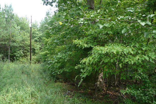 Lot 124 E Creek Road, Fort Lawn, SC - USA (photo 4)