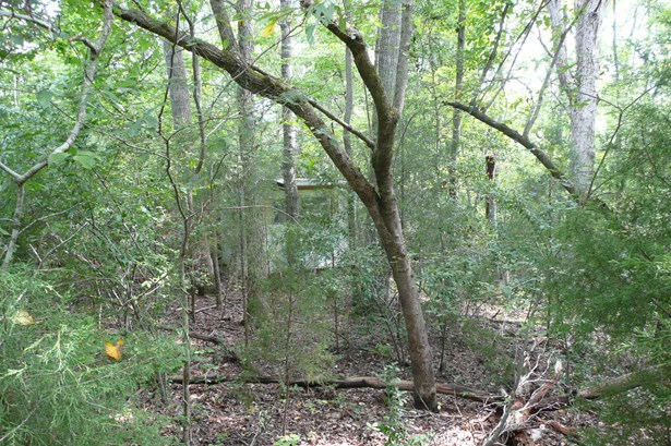 Lot 124 E Creek Road, Fort Lawn, SC - USA (photo 5)