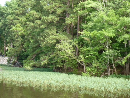 29 Blue Bird Lane, Winnsboro, SC - USA (photo 5)
