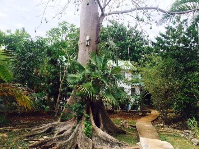 Bananas Garden, Negril - JAM (photo 3)