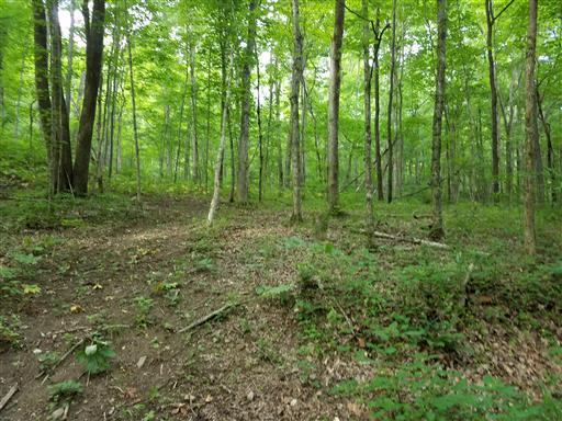 Lots and Land - Pegram, TN (photo 3)