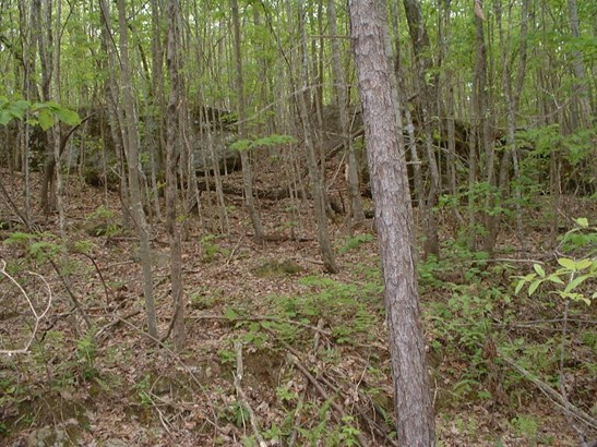 Lots and Land - Signal Mountain, TN (photo 1)