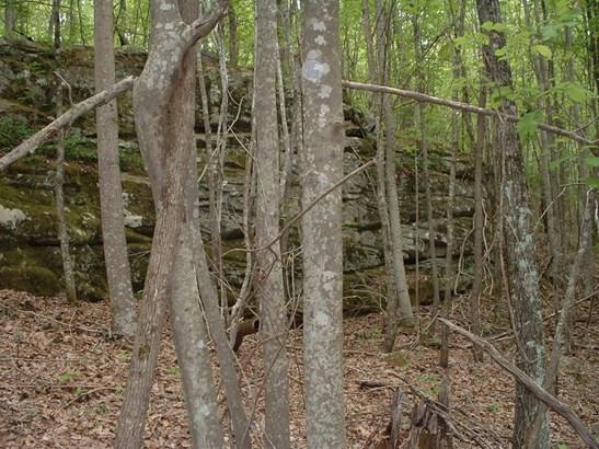 Lots and Land - Signal Mountain, TN (photo 3)