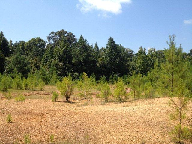 Lots and Land - McCall Creek, MS (photo 1)