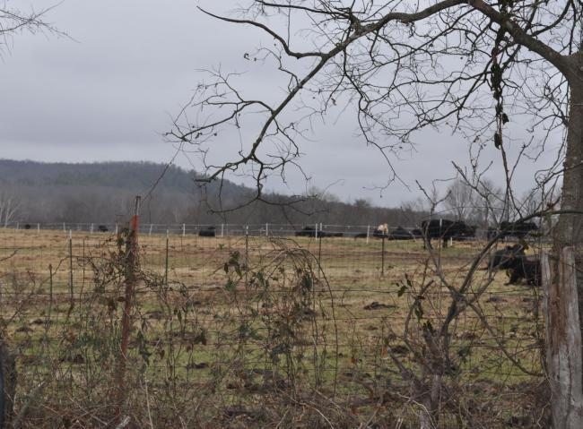 Lots and Land - BATESVILLE, AR (photo 1)
