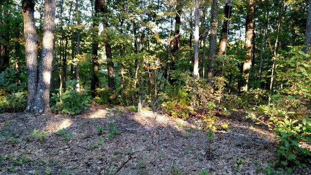 Lots and Land - Jamestown, TN (photo 2)
