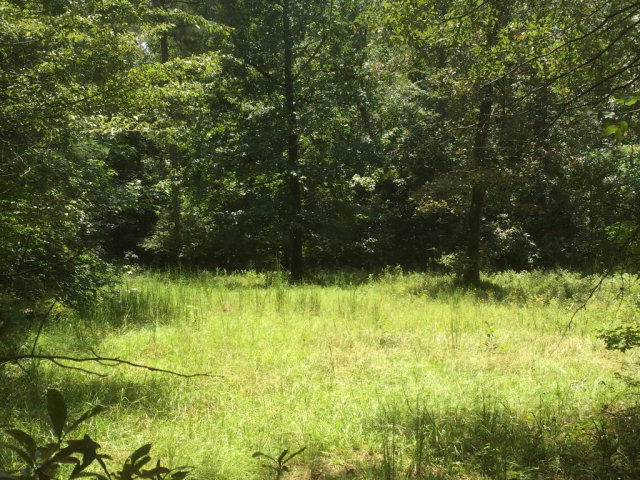 Lots and Land - Bogue Chitto, MS (photo 2)