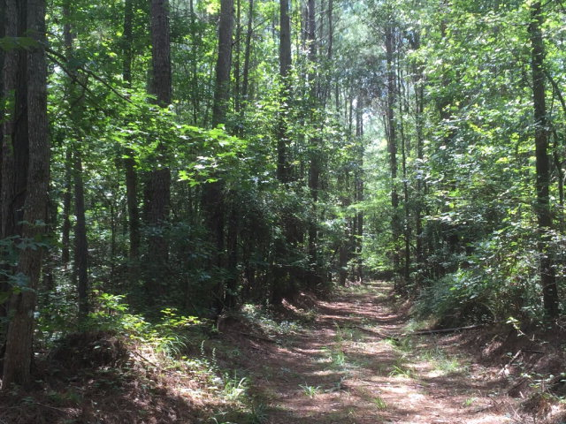 Lots and Land - Bogue Chitto, MS (photo 3)