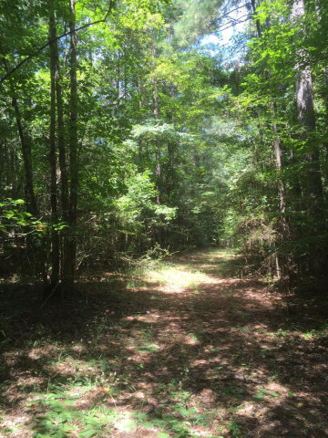 Lots and Land - Bogue Chitto, MS (photo 5)