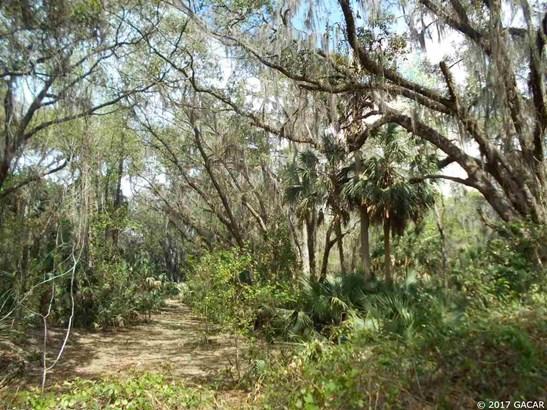00 Wacahoota , Micanopy, FL - USA (photo 1)