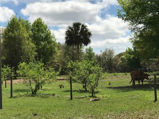 0 Cr 439 , Eustis, FL - USA (photo 4)