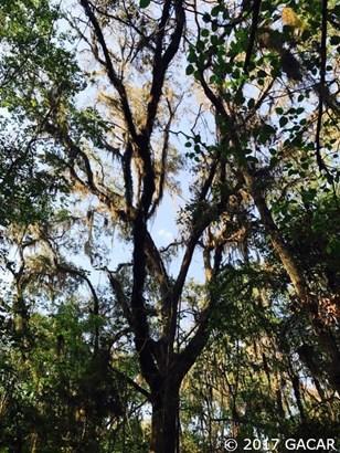 00 177 , Reddick, FL - USA (photo 2)