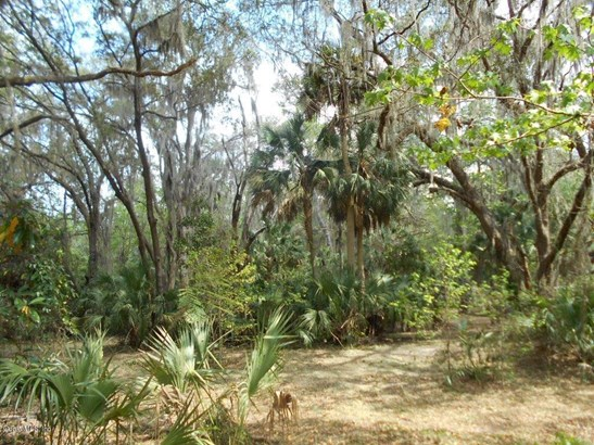 00 Wacahoota , Micanopy, FL - USA (photo 3)
