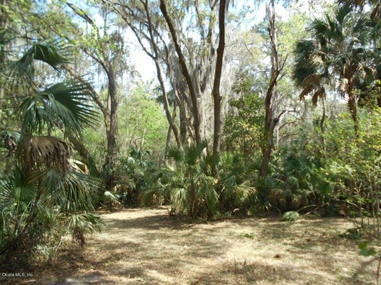 00 Wacahoota , Micanopy, FL - USA (photo 4)