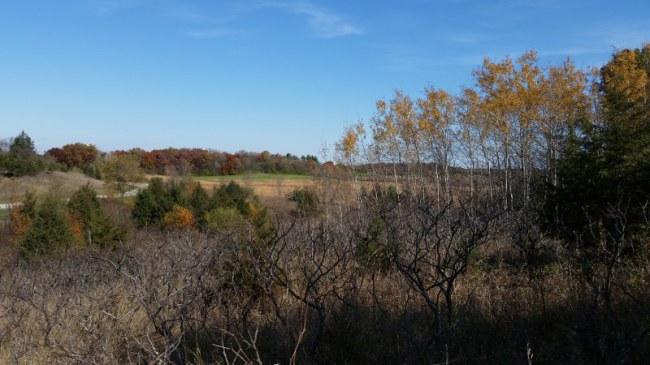 land (photo 2)