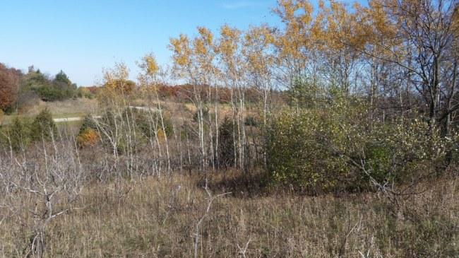 land (photo 3)