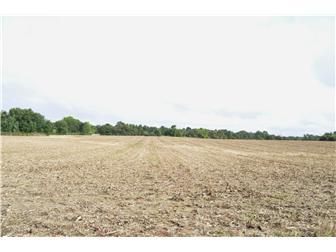 Beautiful tillable land (photo 1)