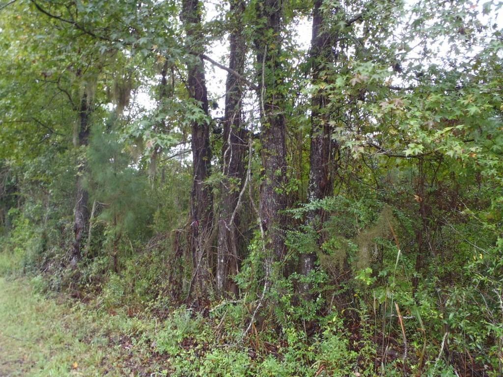 0  Campbell Thickett Road, Ridgeville, SC - USA (photo 2)