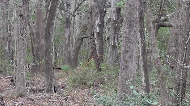 0  Back-a-wood Road Lot I, Wadmalaw Island, SC - USA (photo 4)