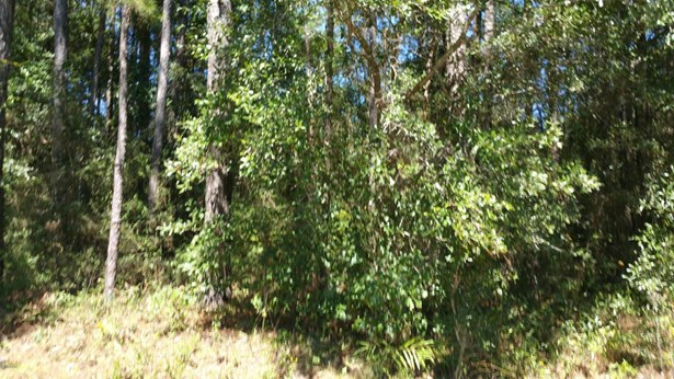 Vacant Land - Chipley, FL (photo 3)
