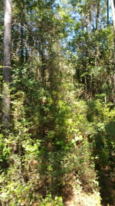 Vacant Land - Chipley, FL (photo 4)