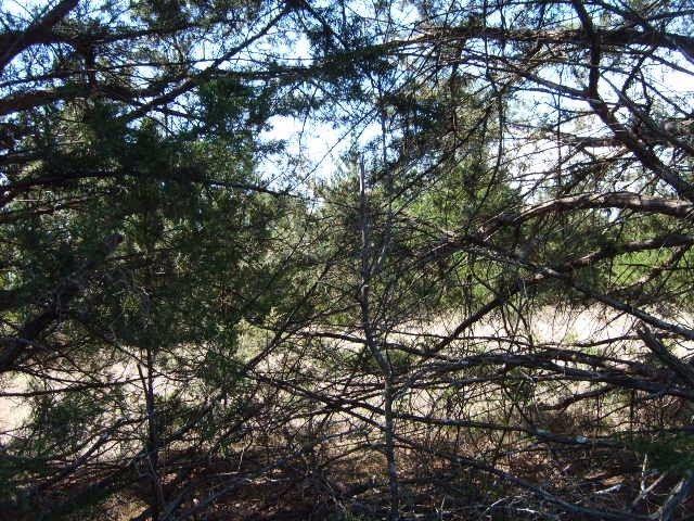 8342b Dripping Springs Road, Denison, TX - USA (photo 2)