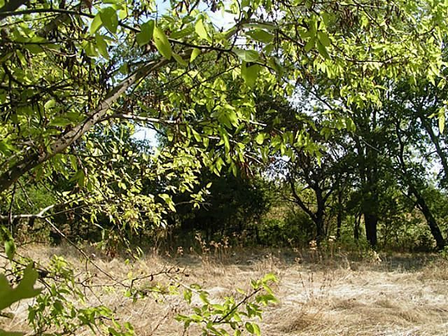 50+ac Fm 1743 A, Honey Grove, TX - USA (photo 5)